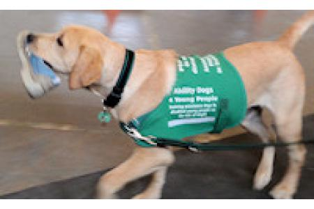 Ability Dogs 4 Young People IoW picture 2