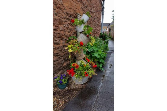 Cannington In Bloom picture 2