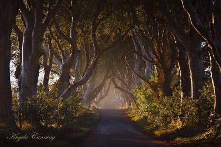 Dark Hedges Preservation Trust
