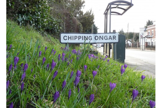 Ongar in Bloom picture 2