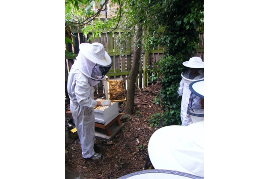 Community beekeeping in Kings Cross