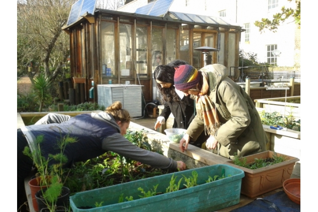 Calthorpe Community Garden picture 2