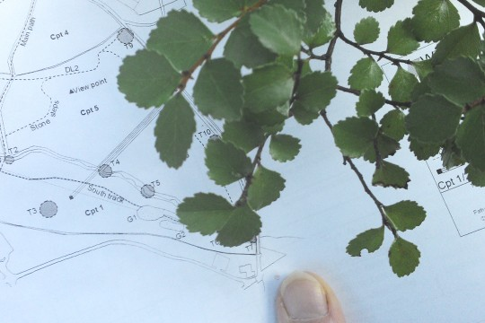 Mapping the trees of Tortworth Arboretum