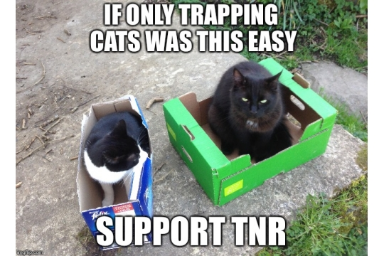 Trap Neuter Return - help feral cats