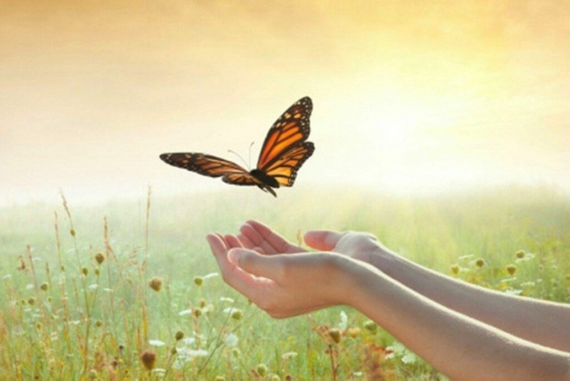 Butterflies Bereavement Suppport