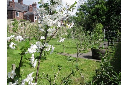 Jesmond Community Orchard picture 2