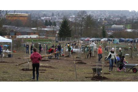 Dorking Community Orchard